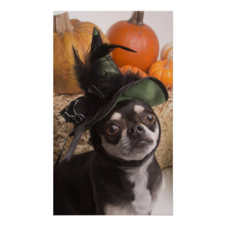 Halloween Witch Dog Poster