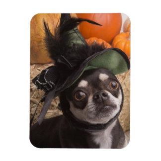 Halloween Witch Dog Rectangular Photo Magnet