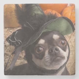 Halloween Witch Dog Stone Coaster