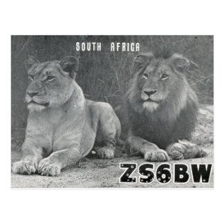 Ham Radio QSL Card South Africa Lions Postcard