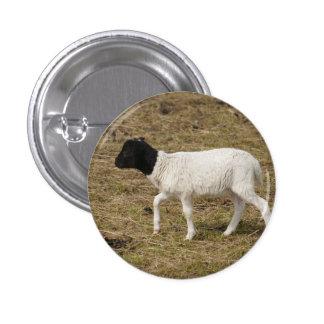 HAMbWG - Square Button - Black Head Sheep