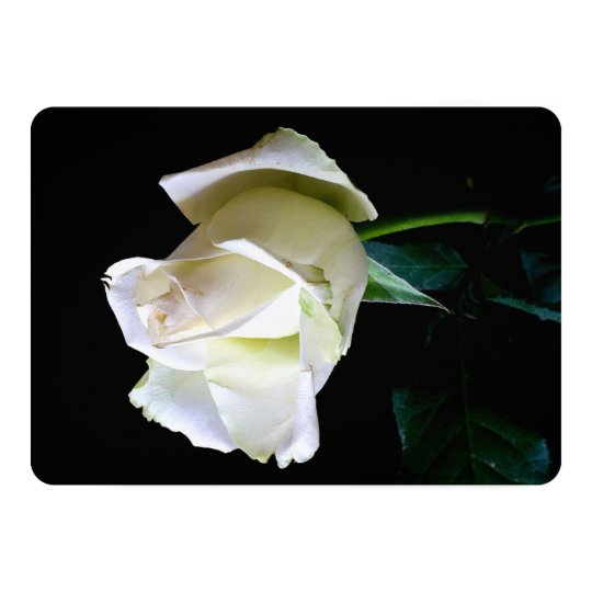 HAMbyWG Invitations/Envelopes - White Rose Card