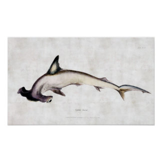 Hammerhead Shark Posters