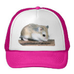 Hammy the hamster hats