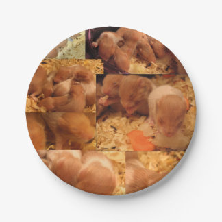Hamster Baby Party Picnic Paper Plates