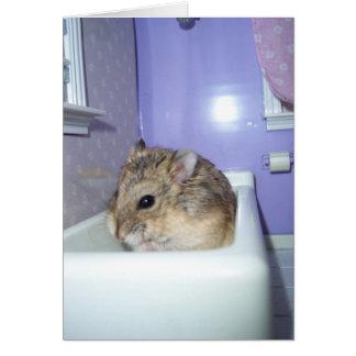 Hamster Bath Note Card