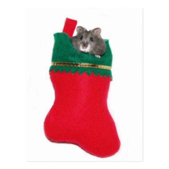 Hamster Christmas stocking Postcard
