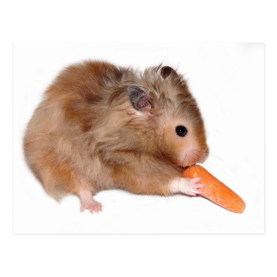 Hamster diet card