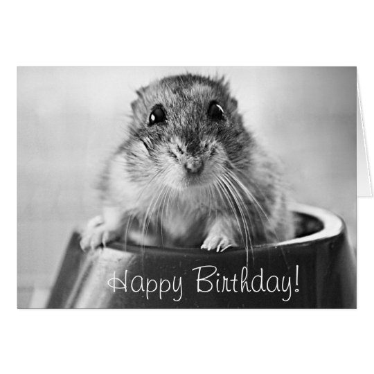 Hamster greeting card, happy birthday card