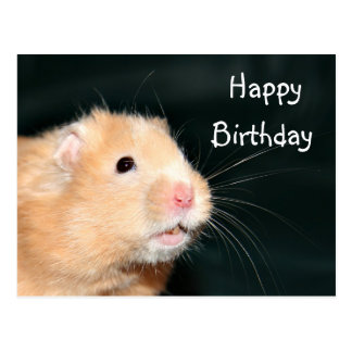Hamster Happy Birthday Postcard