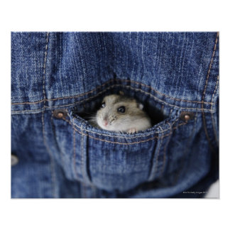 Hamster in pocket poster