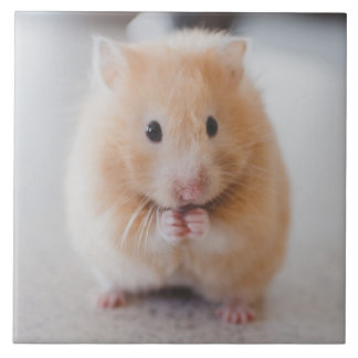 hamster large square tile