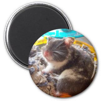 hamster noah 6 cm round magnet