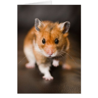 Hamster Note Card