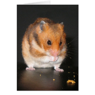 Hamster notecard