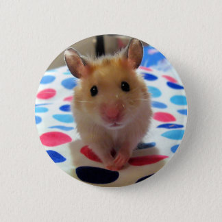 Hamster Pinback Button