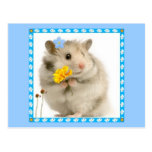 hamster post card
