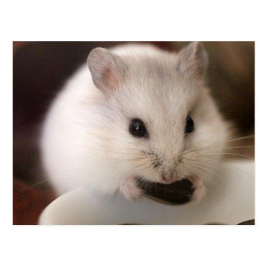 Hamster Postcard