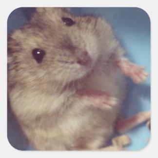 Hamster Square Sticker