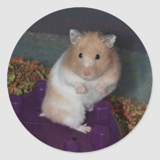 Hamster Stickers - Round