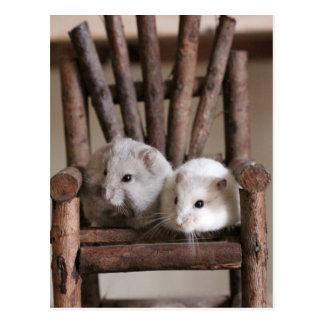 Hamsters Postcard
