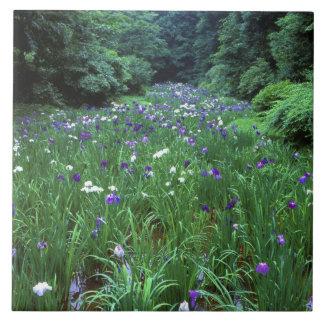 Hana Shobu (Japanese Water Iris), Meiji Shrine, Tile