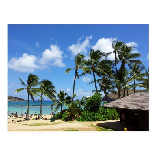 Hanauma Bay Hawaii Coconut Trees Postcard