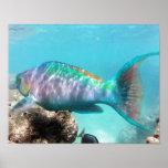 Hanauma Bay Hawaii Parrot Fish Posters