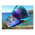 Hanauma Bay Oahu Hawaii Parrot Fish Postcard