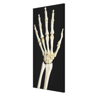 Hand Bones Canvas Print