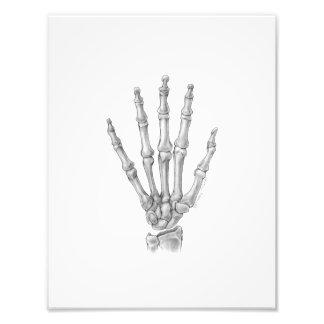 Hand Bones Illustration Photo Print