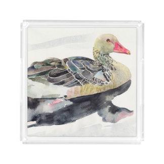 Hand Draw Watercolor Bird, Duck