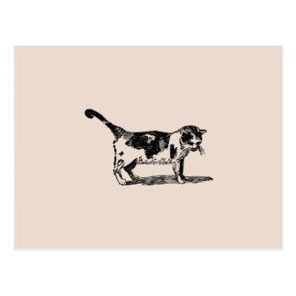 Hand Drawn Cute Cat Kitten Drawing Postcard