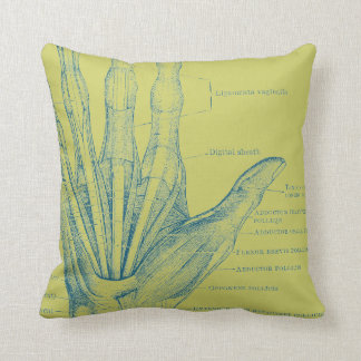Hand fingers muscles - anatomy cushions