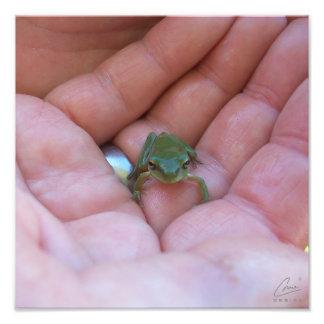 Hand Frog Photo Print