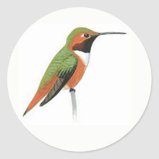 Hand Painted Hummingbird Sticker