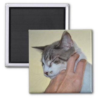 hand scratching kitten cute cat design refrigerator magnets