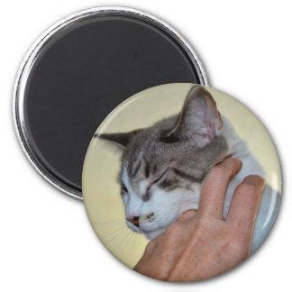 hand scratching kitten cute cat design magnets