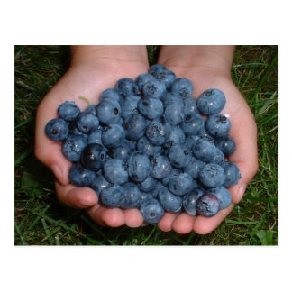 Handful of Fresh Blueberries Postcard