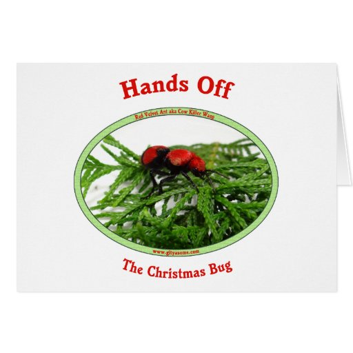 Hands Off Christmas Bug Red Velvet Ant Greeting Cards