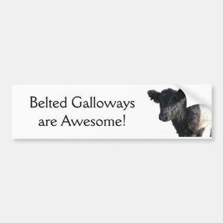 Handsome Belted Galloway Steer Bumper Stickers