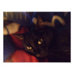 Handsome Black Cat Poster