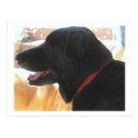 Handsome Black Lab Portrait - Ranch Dog Lover