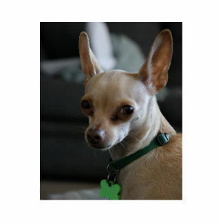 Handsome Chihuahua Standing Photo Sculpture