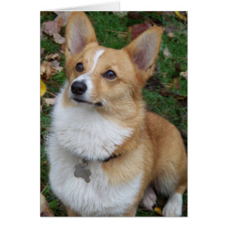 Handsome Corgi Greeting Cards