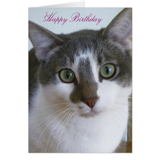 Handsome Grey and White Cat Birthday Card