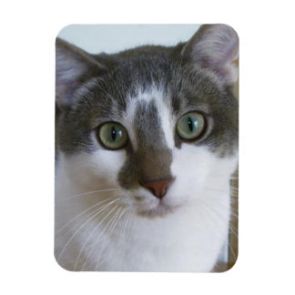 Handsome Grey and White cat Rectangle Magnet