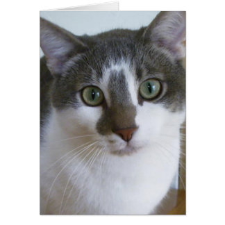 Handsome Grey and White cat Greeting Card