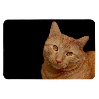 Handsome Orange Tiger Cat Rectangular Photo Magnet