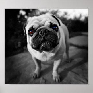 Handsome Pug Print
